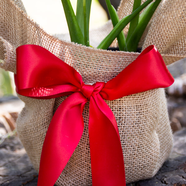80006793 - Gift Wrapped (2)