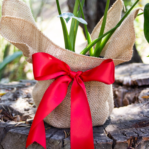 80006793 - Gift Wrapped (5)