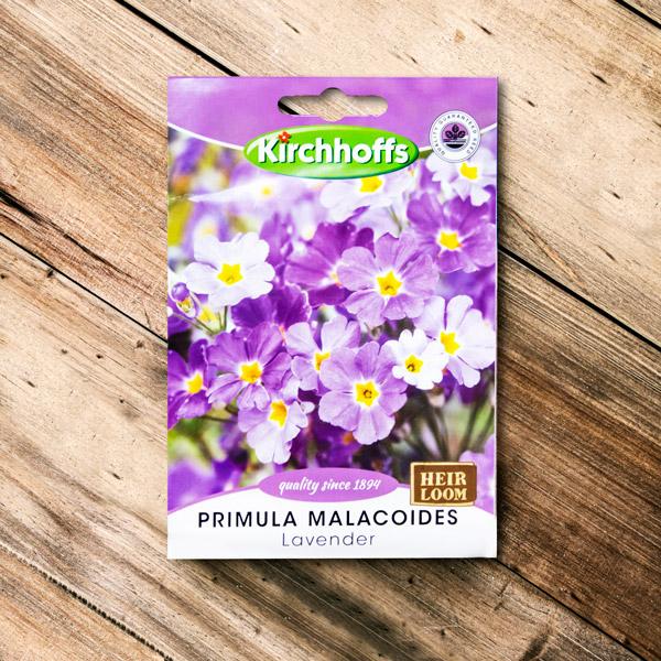 70062668 - Kirchhoffs - Primula Malacoides Lavender