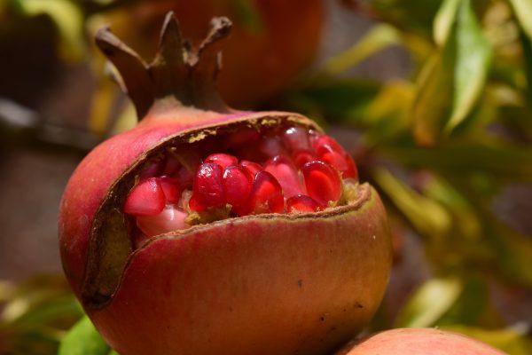 70045732 - Pomegranate - Punica Wonderful