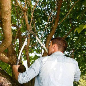 Gardena – Premium Cut Pruning