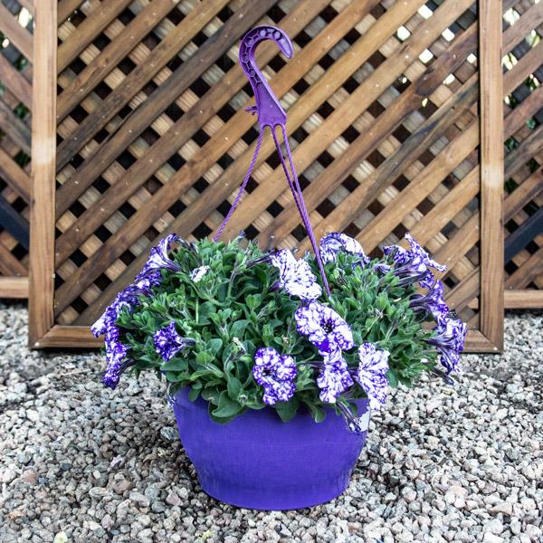 10002780 - Hanging Basket Assorted