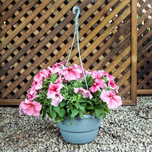 70036057 - Hanging Basket