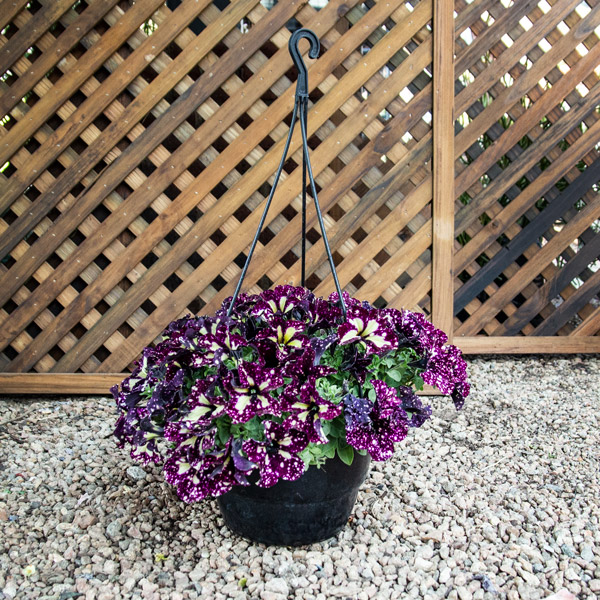 70049984 - Hanging Basket