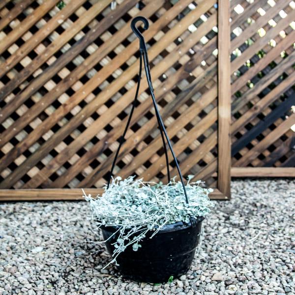 70049984 - Hanging Basket