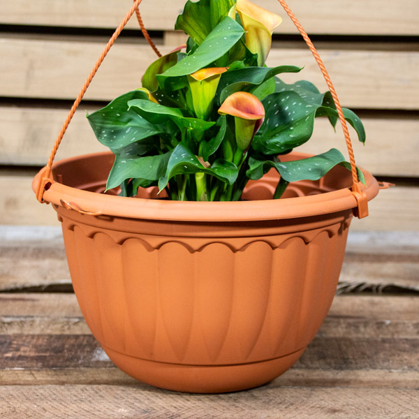70056734 - GP Hanging Pot 31cm