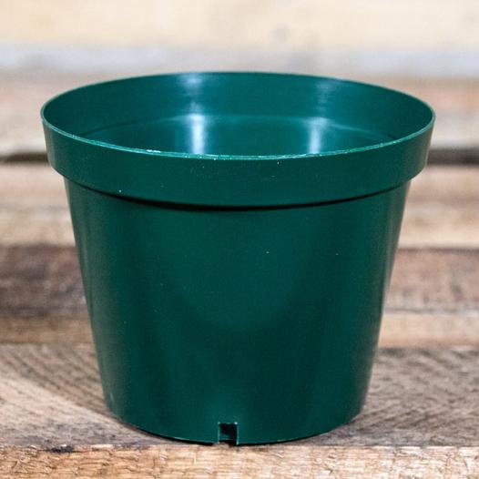 80005475 - Plastic Pot 12cm (2)