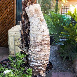 Nesting Log