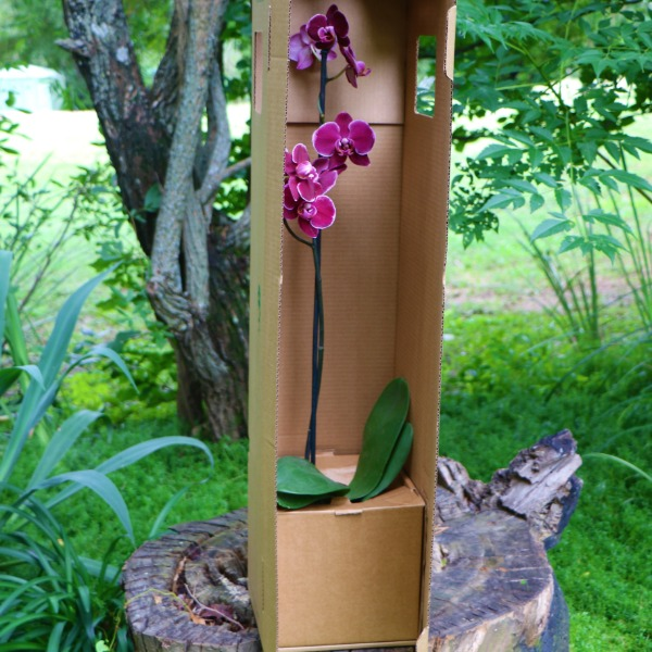 box for orchid