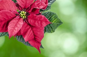 HOW TO PREPARE YOUR GARDEN FOR THE FESTIVE SEASON!