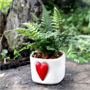 Gift Val Mix Fern