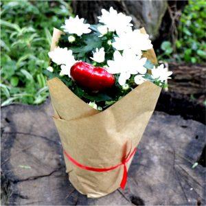 Gift Val Chrysanthumum