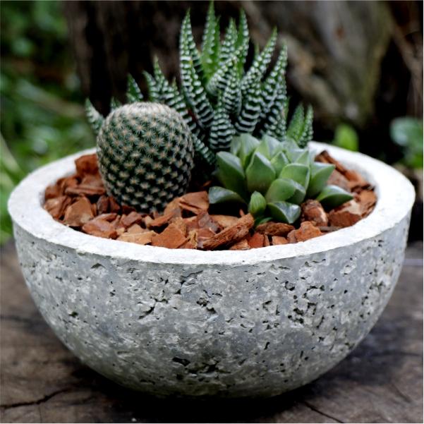 70062422- Mix Succulent Bowl
