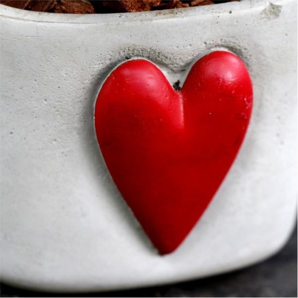 70062424 -Valentines Mix Fern