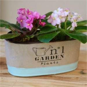 Two tone Grey and blue Container with African violets