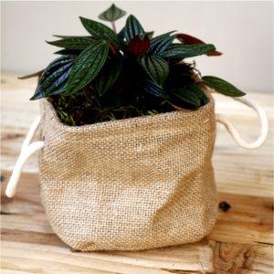 Small Hesssian bag with Peperomia