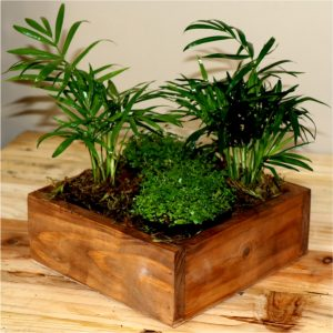 Small wooden box with Peace in the home and Love Palms