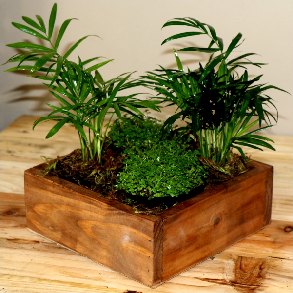 70063175 - Small wooden box with Peace in the home and Love Palms