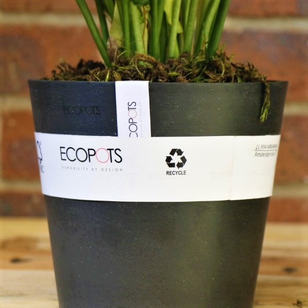 70063240 - Eco Pot with Calla Lily (4)
