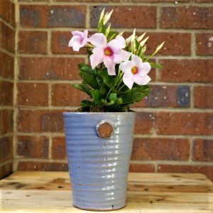 Grey Pot with Mandevilla