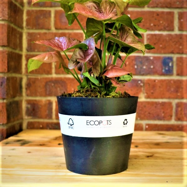 70063243 - Eco pot with Angel Wings (2)