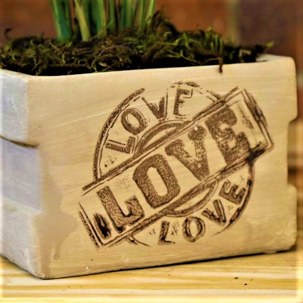 70063249 - Square Planter with Love Palm (2)