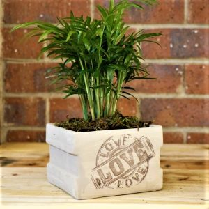 Square Planter with Love Palm