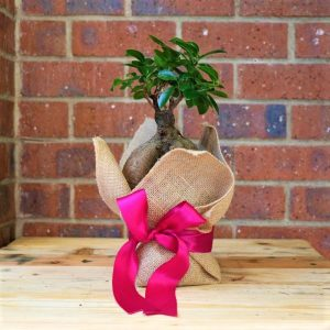 Hessian bag with Bonsai