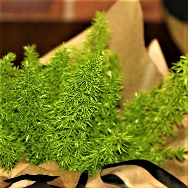 70063375 - Wrapped Asparagus Fern (2)