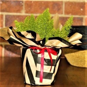 Wrapped Asparagus Fern