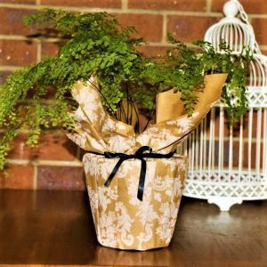Wrapped Maiden Hair Fern