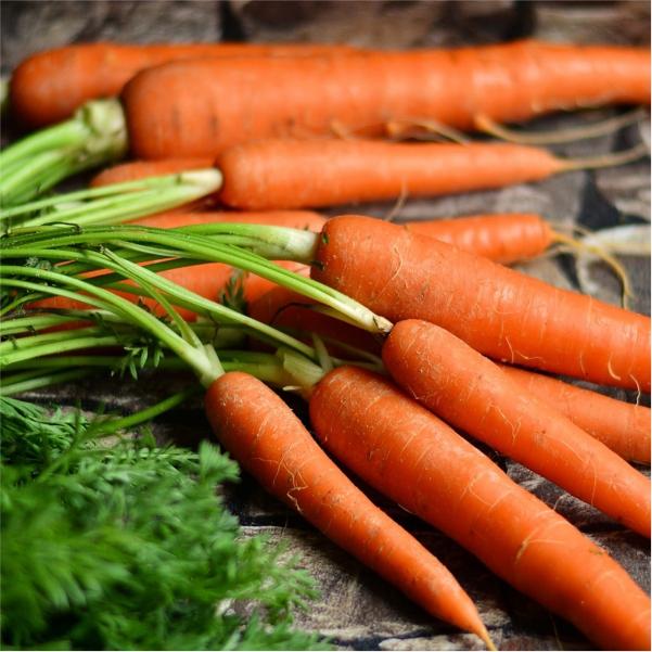 70063426 -Mayford carrots Seeds