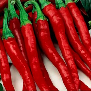 Mayford Hot Pepper Seeds