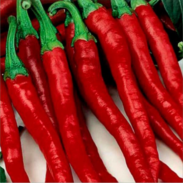 70063427- Mayford Hot Pepper Seeds