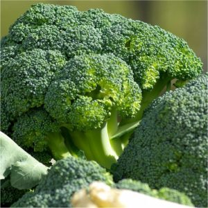 Mayford Broccoli Seeds