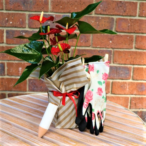 70063806 - Wrapped Flamingo Plant with Waterplug Stick And Garden Gloves