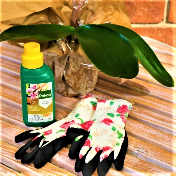 70063807 - Wrapped Moth Orchid With bonsai Food And Garden Gloves (3)