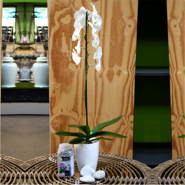 70063870 - White Phalaenopsis with message stone,Orchid pot and Brockytony