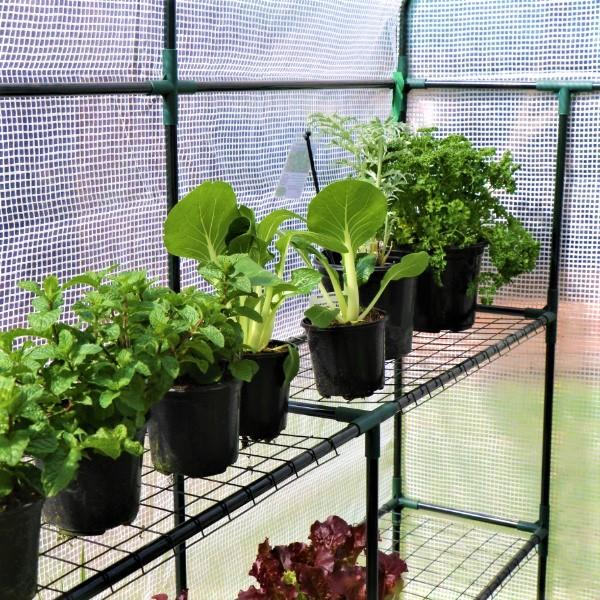 70063896 -PH Greenhouse (4)