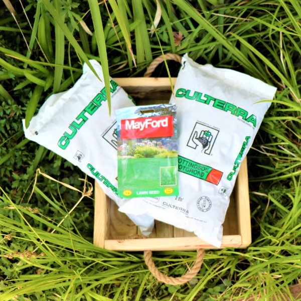 70063899 -Wooden Box With Potting Soil and Mayford Seeds