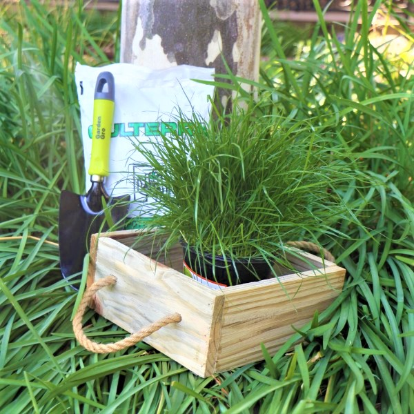 70063911 -Wooden Box with Potting Soil , Garden Trowel And selected Living herb