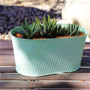 Oval Zinc Green Planter 24cm With a selection of miniature Aloe species