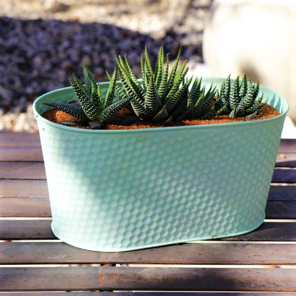 70063981 -Oval Zinc Green Planter 24cm With a selection of miniature Aloe species