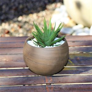 Grey round terracotta pot with miniature Aloe selection