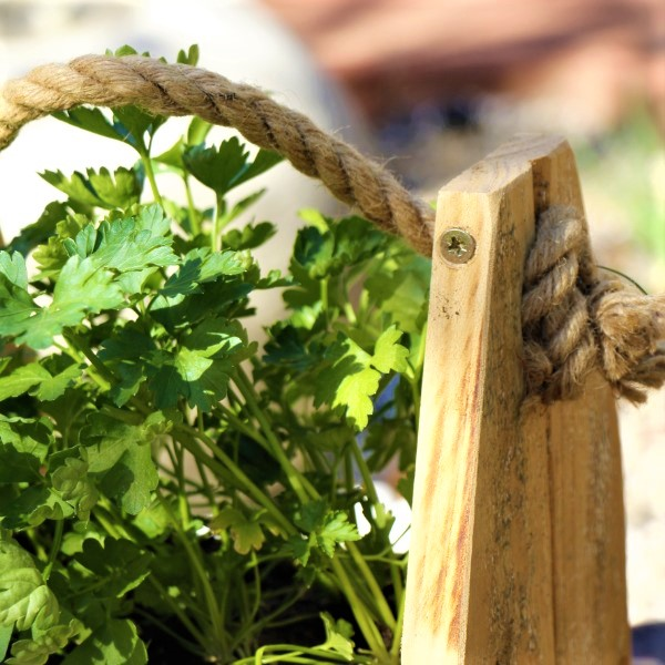 70064368 - Wooden box with Parsley (4)