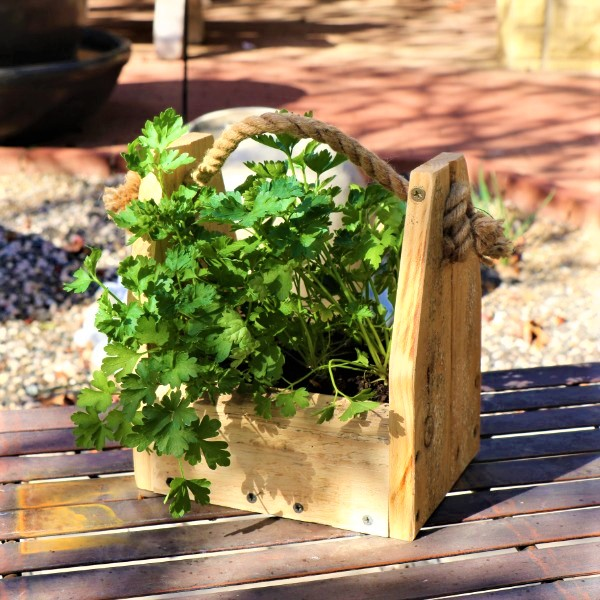 70064368 - Wooden box with Parsley