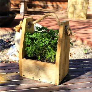 Wooden box with  Italian Parsley