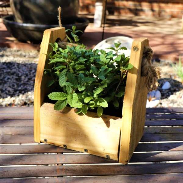 70064372 - Wooden box with Mint Julep (2)