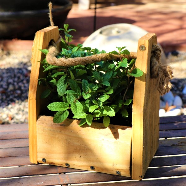 70064372 - Wooden box with Mint Julep (3)