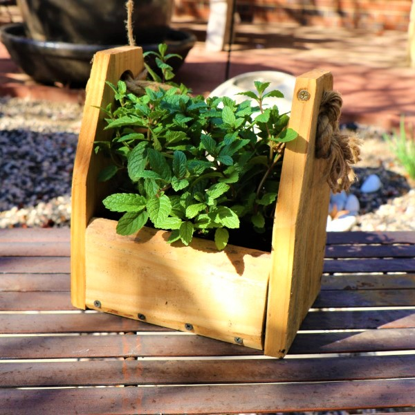 70064372 - Wooden box with Mint Julep